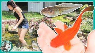 Fish Pond or Frog Pond? // POND UPDATES