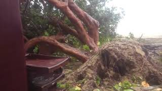 Нячанг .Парк Горького,після тайфуну Дамрі 4 листопада 2017