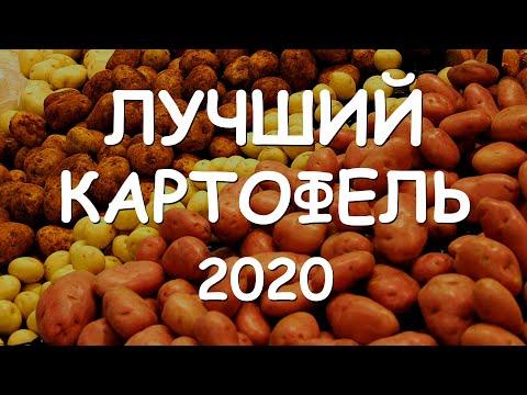 Лучшие сорта картофеля 2020