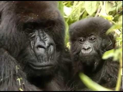 Remembering Dian Fossey