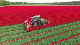 Topping Tulips | John Deere 6R on Soucy Tracks | JVS triple topper | DJ Visser bloemen Holland