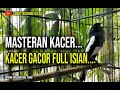 Kacer Gacor Full Isian Cocok Buat Masteran Juara  Mp3 - Mp4 Download