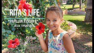 Papillon Ayscha