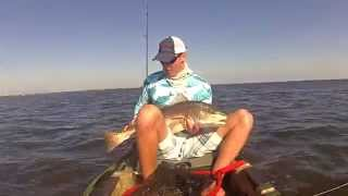 "Florida Redfish 36.5"" Bull Redfish, Northern Indian River Lagoon, Kayak Fishing"