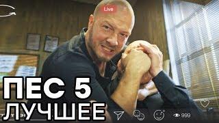 Сериал ПЕС - 5 сезон - ВСЕ СЕРИИ смотреть онлайн | ЛУЧШИЕ МОМЕНТЫ