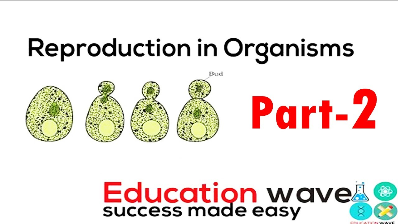 a look at the reproduction process in organisms The process by which cells and organisms produce other cells and organisms of the same kind ♦ the reproduction of organisms by the union of male and female reproductive cells (gametes) is called sexual reproduction.