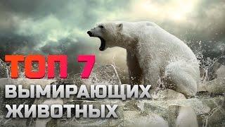 видео Животные Красной книги: список исчезающих видов