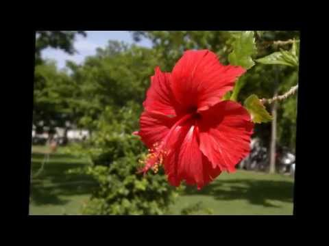 flowers---the-symbol-of-love---youtube-images