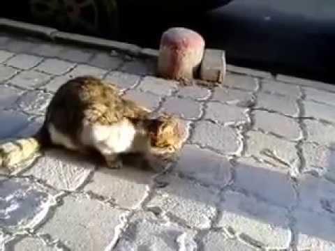 straßenkatzen-hungrig-:)