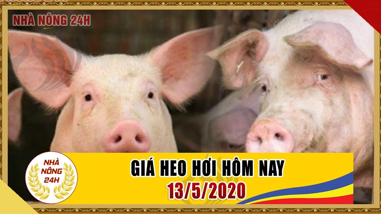 Giá heo hơi ngày hôm nay 13/5/2020   Giá lợn hơi vẫn tiếp tục tăng   Tin tức 24h nhà nông