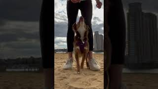 Teaching My Dog New Tricks