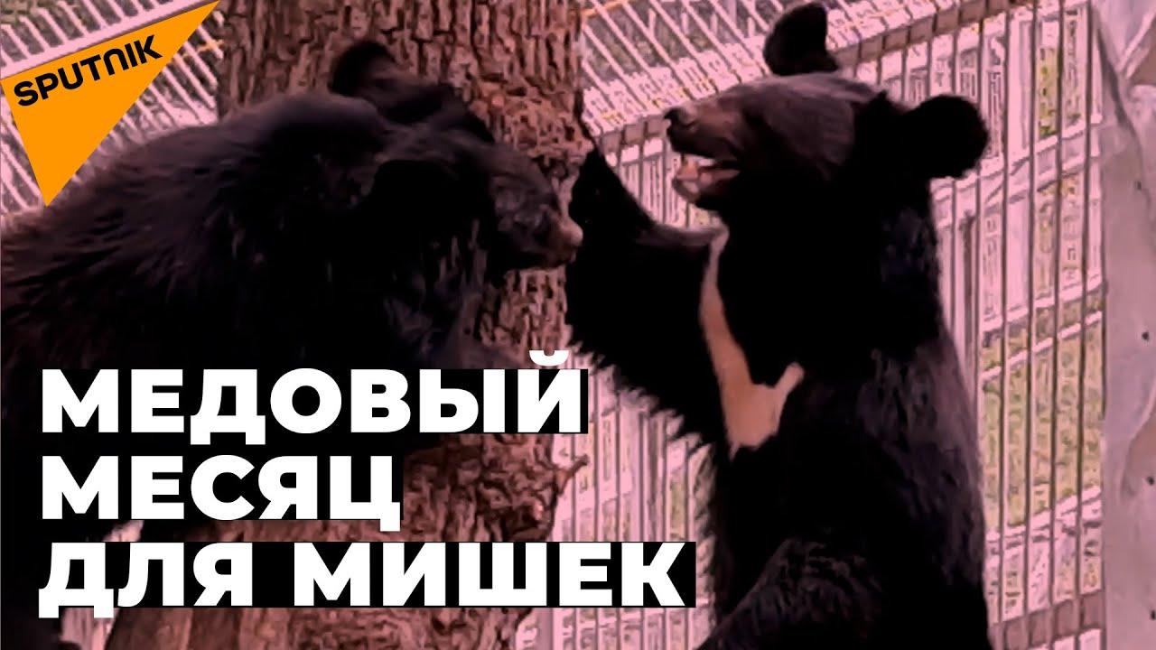 Романтическая история гималайских медведей в Алматинском зоопарке: знакомство