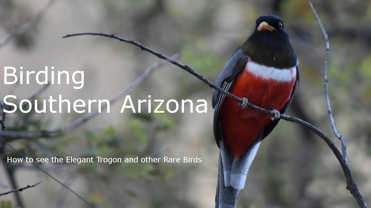 How To See The Elegant Trogon Birding Southern Arizona Youtube