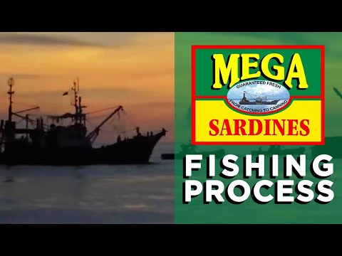 The Fishing Process | How Sardines Are Made | The Mega Global Story