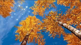 Осень (слайд-шоу) - Automne (slide-show)