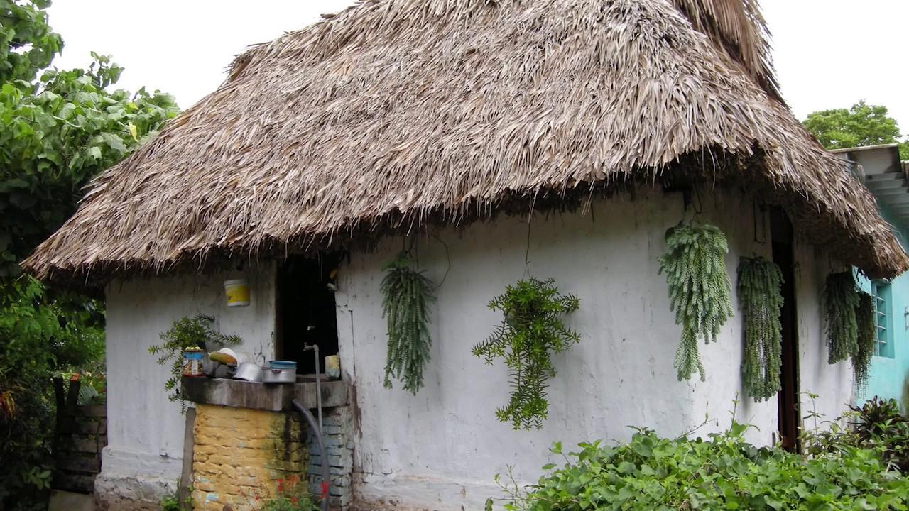 Servicios Ecosistémicos de los Bosques y Selvas Costeros de Veracruz (OIMT)