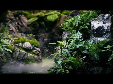 RAINFOREST PALUDARIUM - 4K CINEMATIC - GREEN AQUA