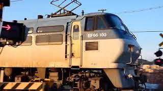 2018/01/16 JR貨物 珍しい1071列車に代走EF66-100番台 大谷川踏切