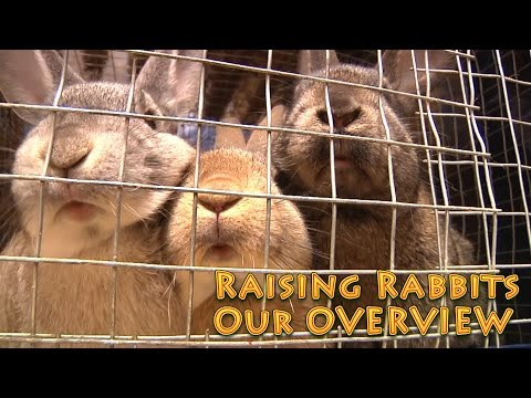 Raising Rabbits an Overview