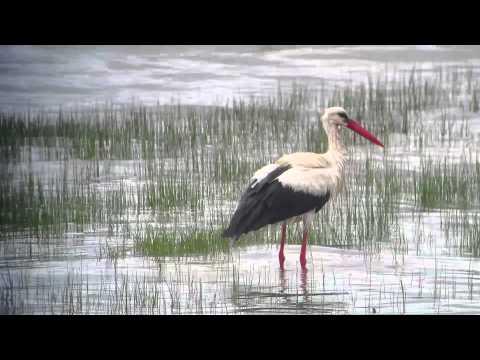 Birding in Turkey: White Storks and the Bosphorus