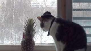 комедия Ностольгия кота Босса