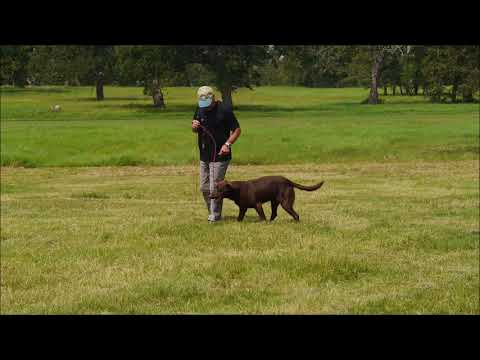 New Way to Teach Heeling with Bill Hillmann and Watermark's Flying Cloud MH