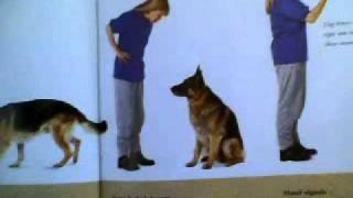 The Dog Training Manual