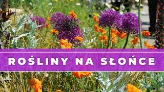 Jakie Kwiaty Byliny Posadzic Na Sloncu 10 Roslin Na Sloneczne Stanowisko Rosliny Do Ogrodu Youtube