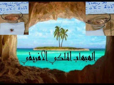 خاتم هبهاب ملكي افريقي سلطاني مشجر وكيفية تجريبه لنعلم انه صحيح