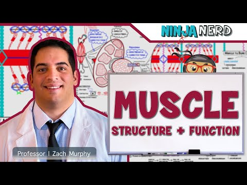 Myology   Muscle Structure and Function