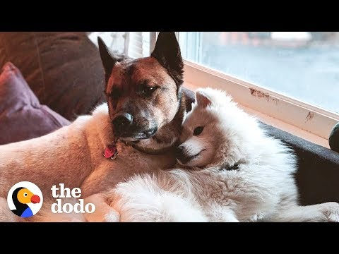 Terrified Neglected Dog Turns Super Sweet | The Dodo Adopt