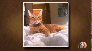 Pets on Parade, May 2 2015 - Meet Milo