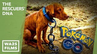 playing pokemon go a howl of a dog was spotted chained to abandoned detroit house no hope for paws