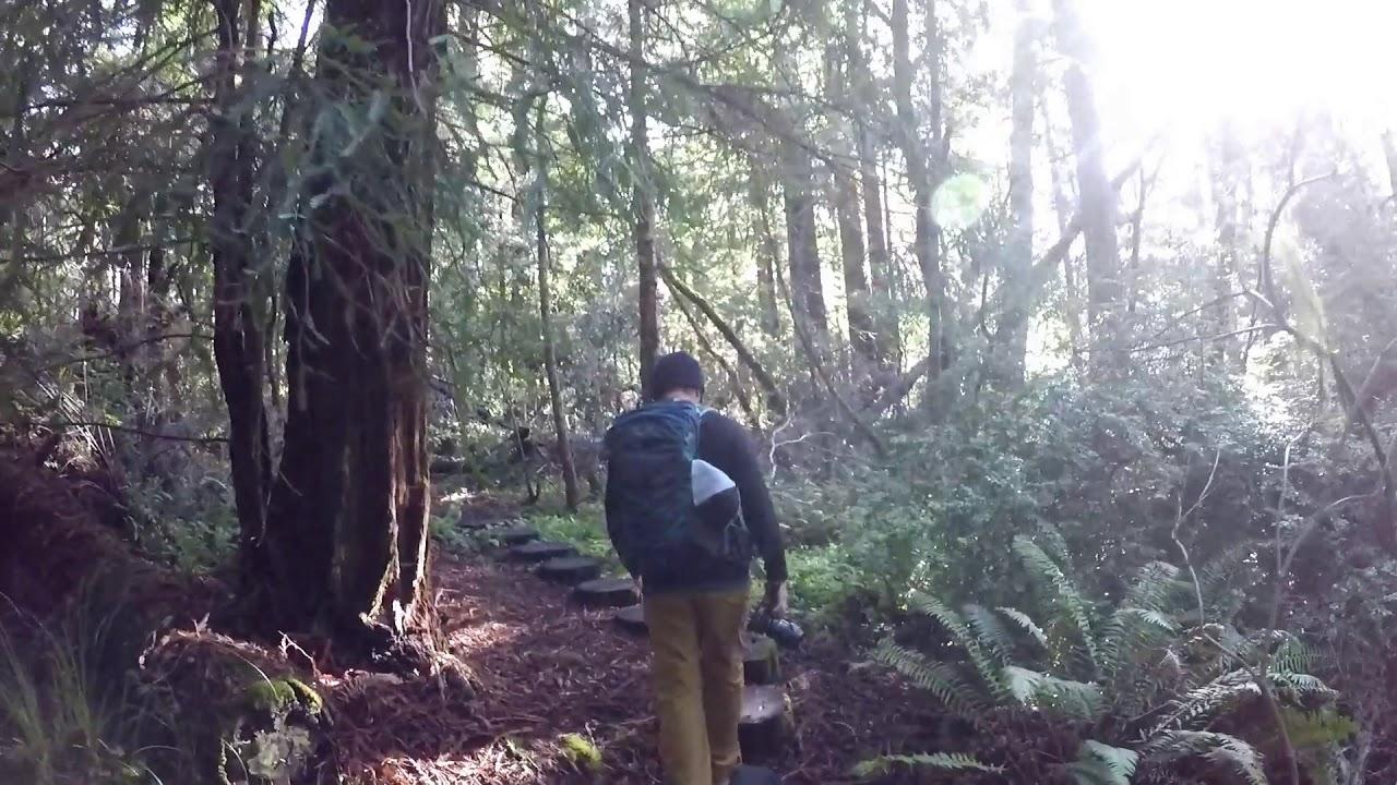 Download Butano State Park, A Hidden Gem