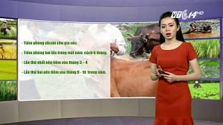 VTC14   Thời tiết nông vụ 13/10/2017   Gia súc ở Bắc Trung bộ bị ảnh hưởng nghiêm trọng