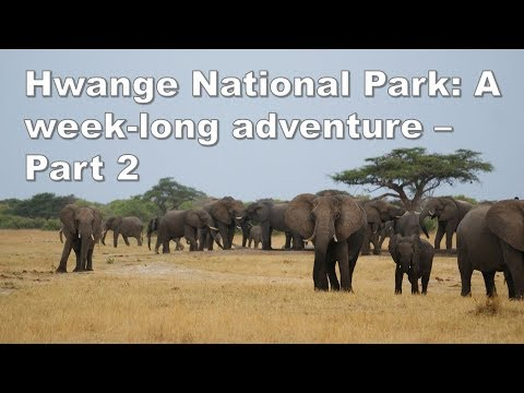 Hwange National Park: A week-long adventure - Part 2/3