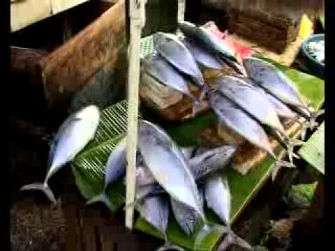 Managing Bycatch And Reducing Discards (English Version)