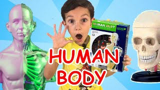 Разбираем Тело Человека для детей | Анатомия для Детей | Human Body for Kids #Stefanchicotv