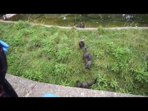 Feeding The Otters At Twycross Zoo