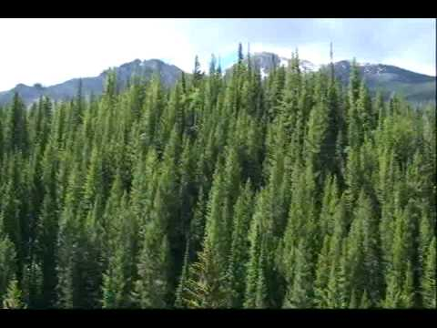 Aspen for Non Skiiers - A video tour of Aspen in summer.