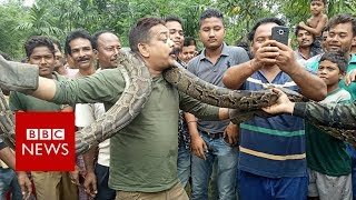 India python: Snake tries to strangle West Bengal selfie taker - BBC News
