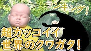 超カッコイイ 世界のクワガタ ランキング ポポラン【PO3P】