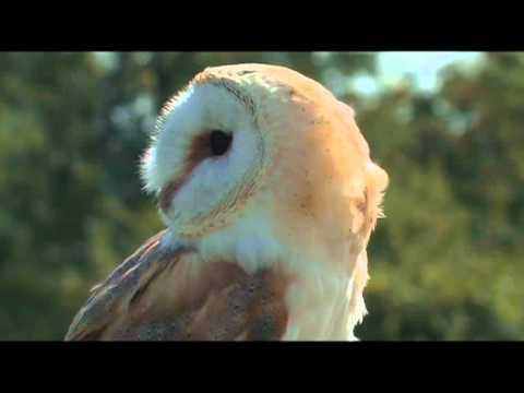 wildlife sequences 'Europe'