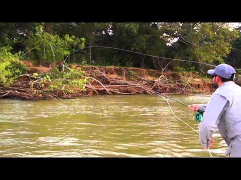 Parana River Argentina Golden Dorado fly fishing-Latin América IF4 selection.
