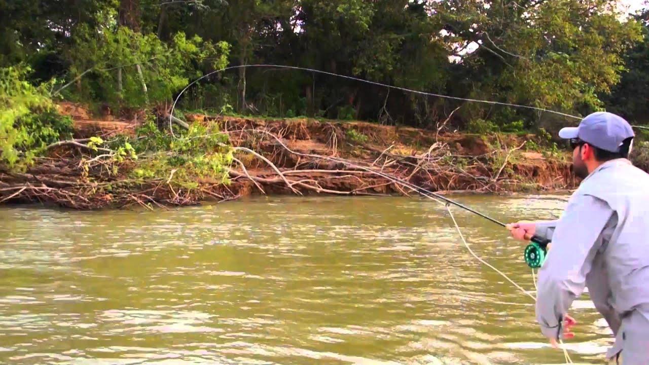 Parana river argentina golden dorado fly fishing latin for Parana the fish