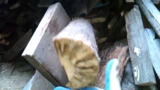 Твердотопливный котел Корди 20 КВт(, 2016-10-21T10:30:22.000Z)