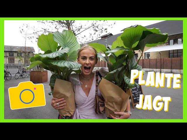 FJOLLER MED MIN KÆRESTE | shopper Justin Bieber, plantejagt, flødeskuuuum