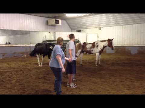 Trinity Equestrian Center - Equine Assisted Development (EAD)