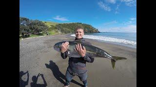 Spearfishing Kingfish NZ (New Zealand) 2018