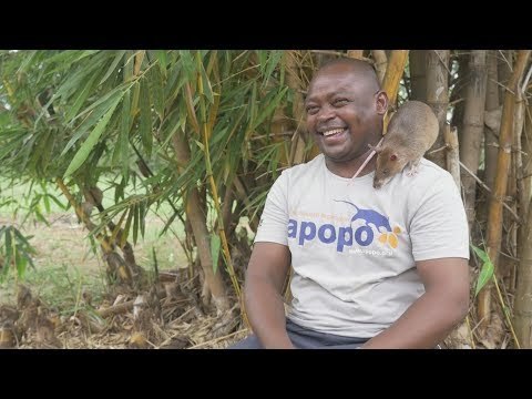 Faces of Africa - Fidelis, APOPO and the Hero